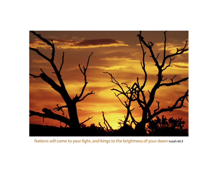 sunset, Utah, Canyonlands, trees photo