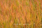 fall color, fall, grass, Colorado, Cottonwood Canyon, abstra