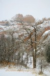 cottonwood, trees, forest, winter, snow, storm, Garden of th