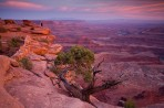 Moab, Utah, Canyonlands, desert, sunset, tree, photographer,
