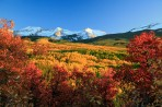 aspens, Kebler Pass, Colorado, trees, fall, red, orange, yel